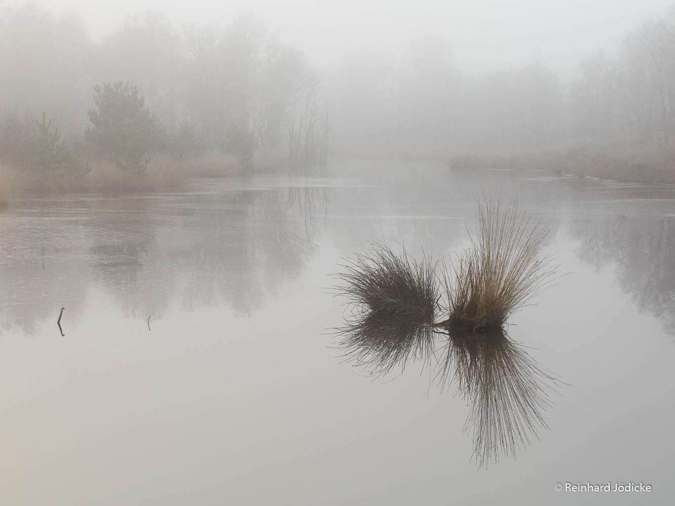 03_März_im Moor