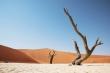 02 Dead vlei - Namibia