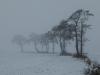 Nebeltag an der Norderbaeke, Westerstederfeld