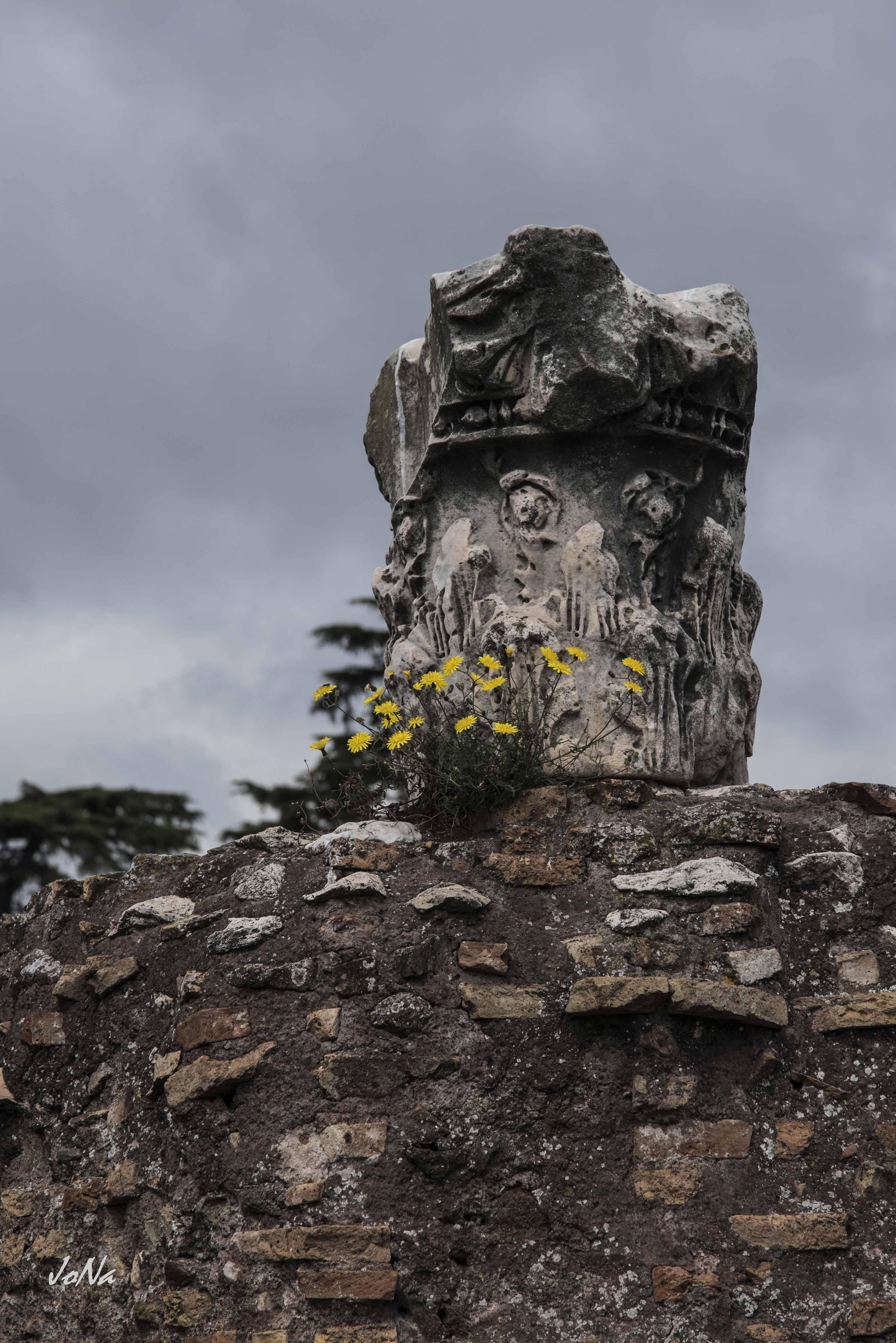 Saeulenrest im Forum Romanum