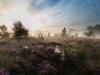 Fintlandsmoor zur Heideblüte